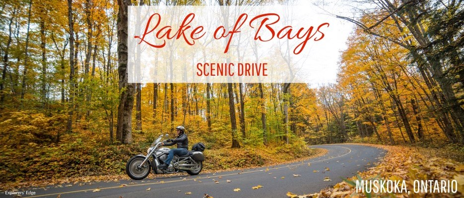 Motorcycle driving on a road with fall coloured leaves