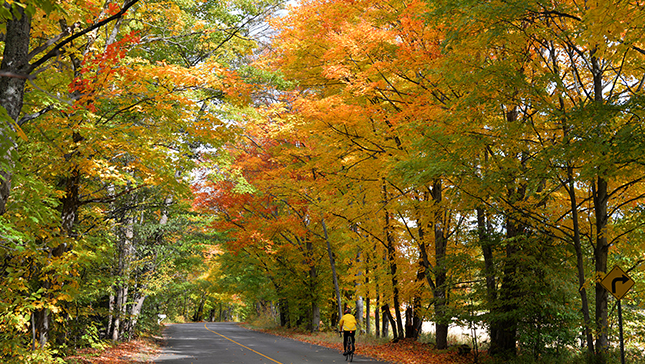 fall colours  with road and cyclist