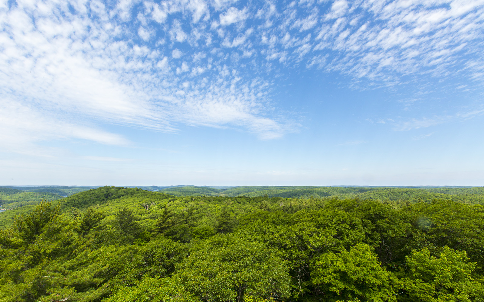 View from Dorset Tower with green trees and blue sky